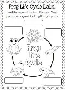 frog life cycle coloring pages Life Cycle of a frog coloring page | fen | Pinterest | Life cycles  frog life cycle coloring pages