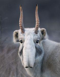 30 seltene Tiere die vielleicht schon bald ausgestorben sind.