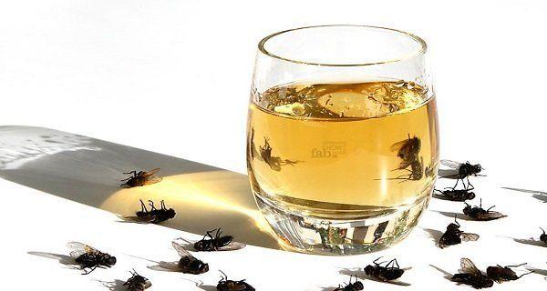 mettez ceci dans votre maison et il n 39 y aura plus de mouches de cafards ou de moustiques en 1. Black Bedroom Furniture Sets. Home Design Ideas