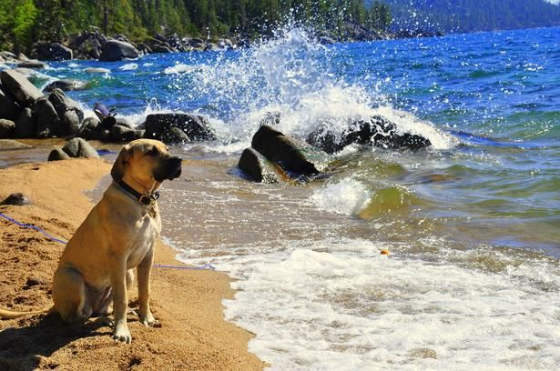 Chimney Beach Lake Tahoe Nevada Side Is Dog Friendly With