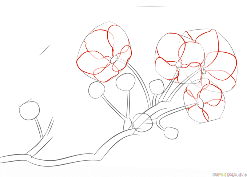 How To Draw A Cherry Blossom Step By Step Drawing Tutorials For Kids And Beginners Cherry Blossom Drawing Flower Drawing Tutorials Flower Drawing