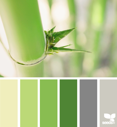 Bamboo Tones Earth Green Grey Color Palette