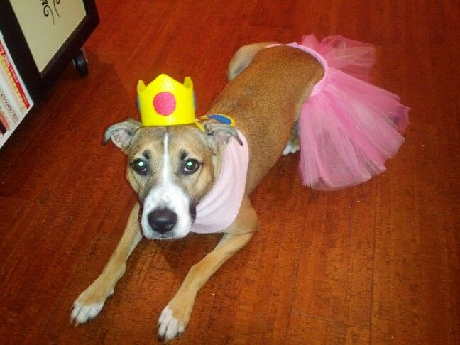 Image result for dogs dressed like princess peach
