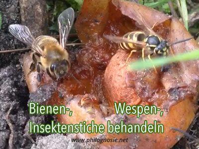 Insektenstiche Mit Wärme Behandeln