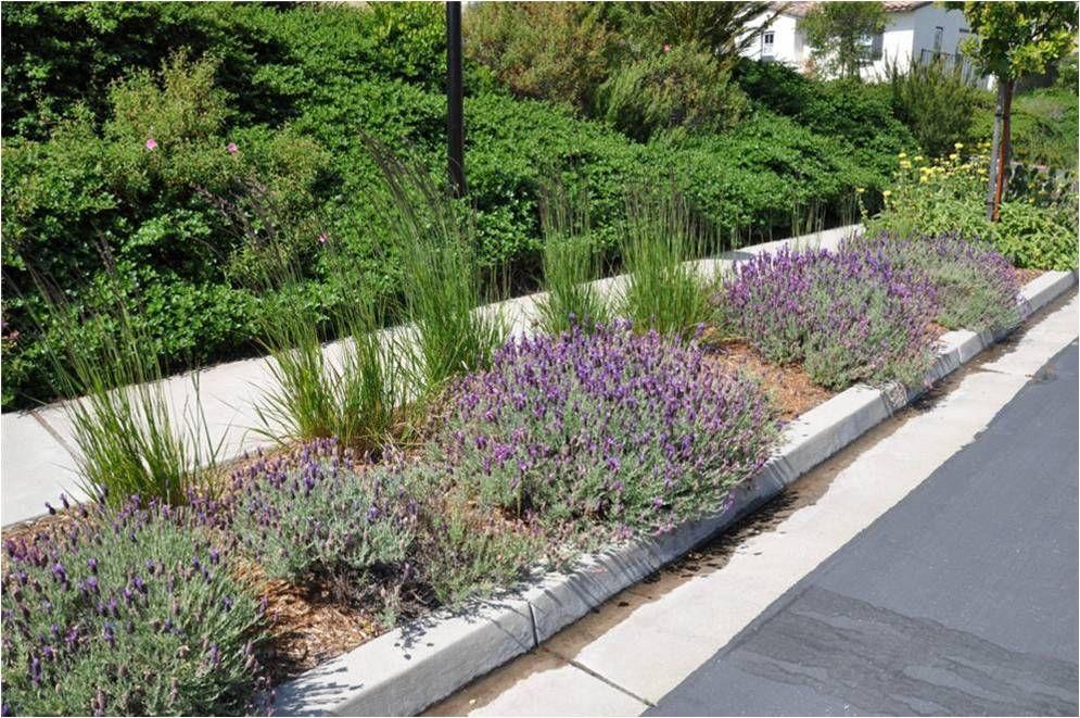 drought tolerant plants & installation