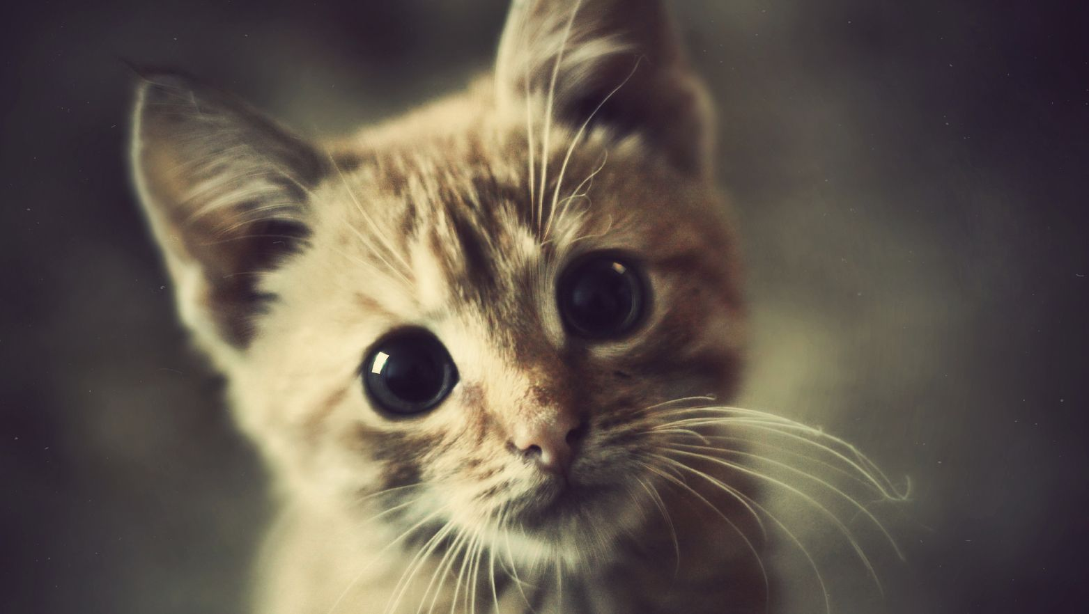 Common Cat Parasite Linked To Angry Outbursts In Humans Feline Health And Happiness Funny Cats Cats Kittens