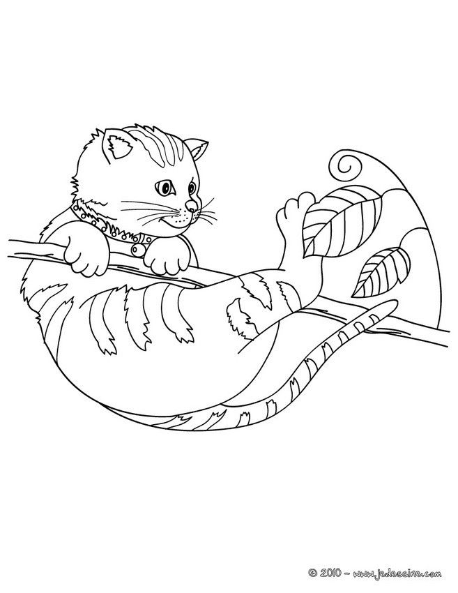 Souvent Coloriage d'un petit chat accroché à une branche qui joue avec des  VJ63