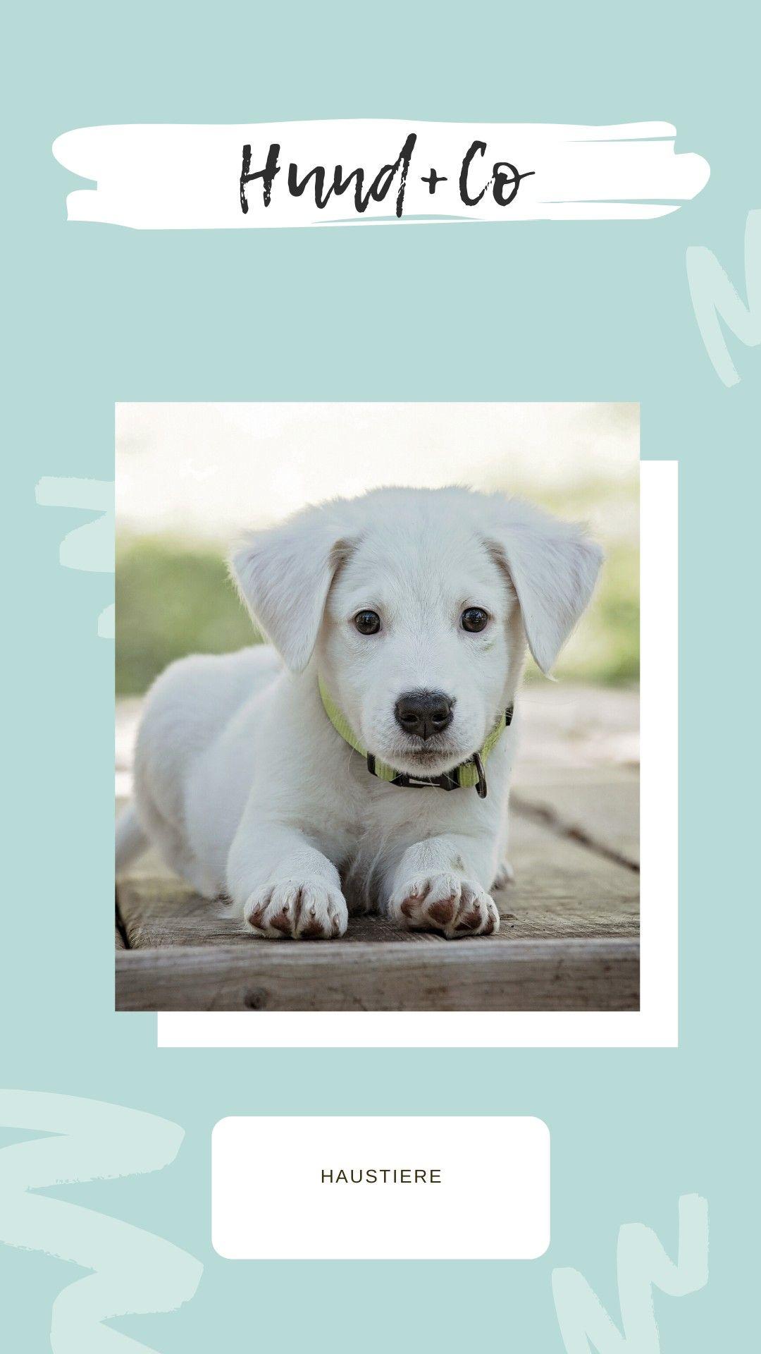 Pupshop In 2020 Haustier Welpen Haustiere