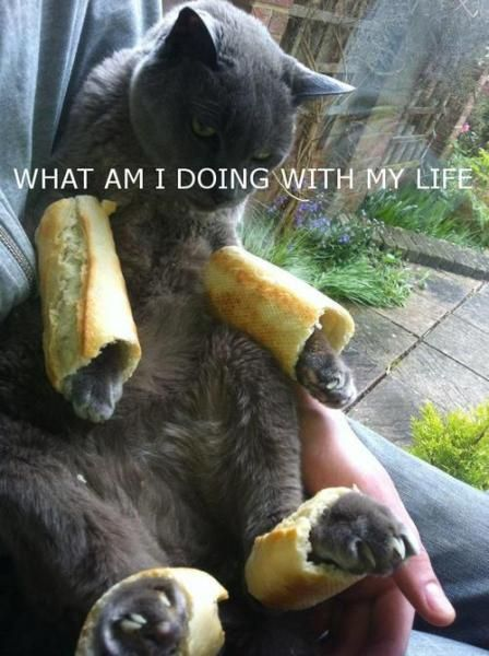 cat with bread arms