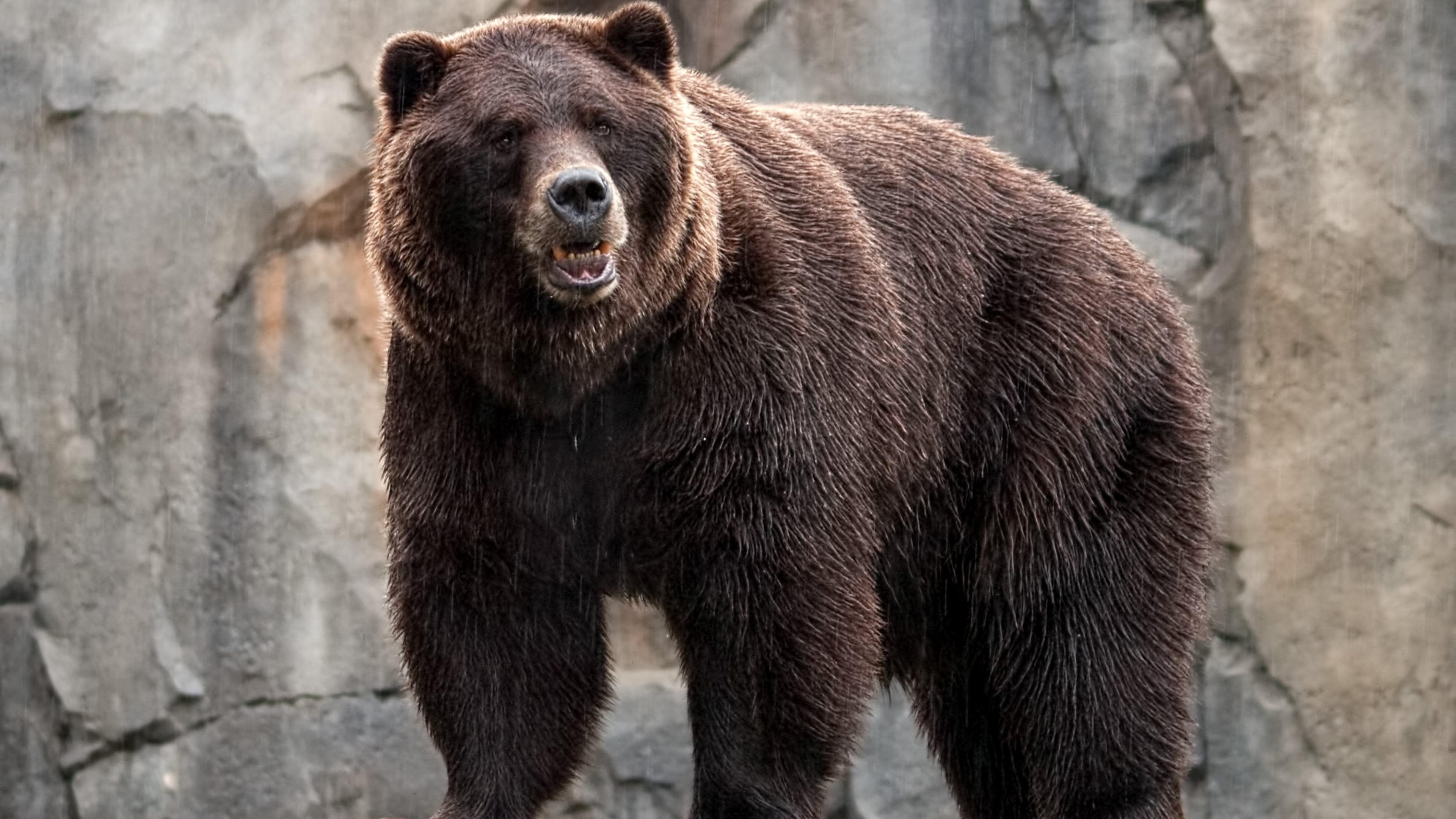 Bear 4k Wallpaper 3840x2160 Wallpaperscreator Pinterest Bear