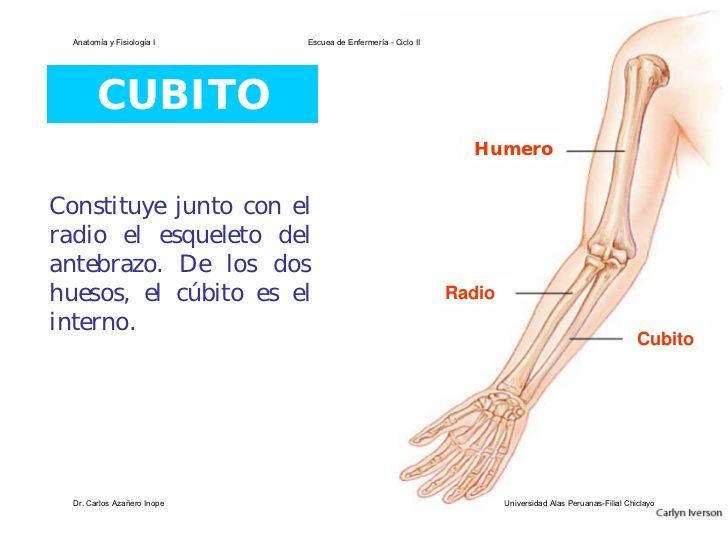 Anatomía y Fisiología I Escuea de Enfermería - Ciclo II CUBITO ...