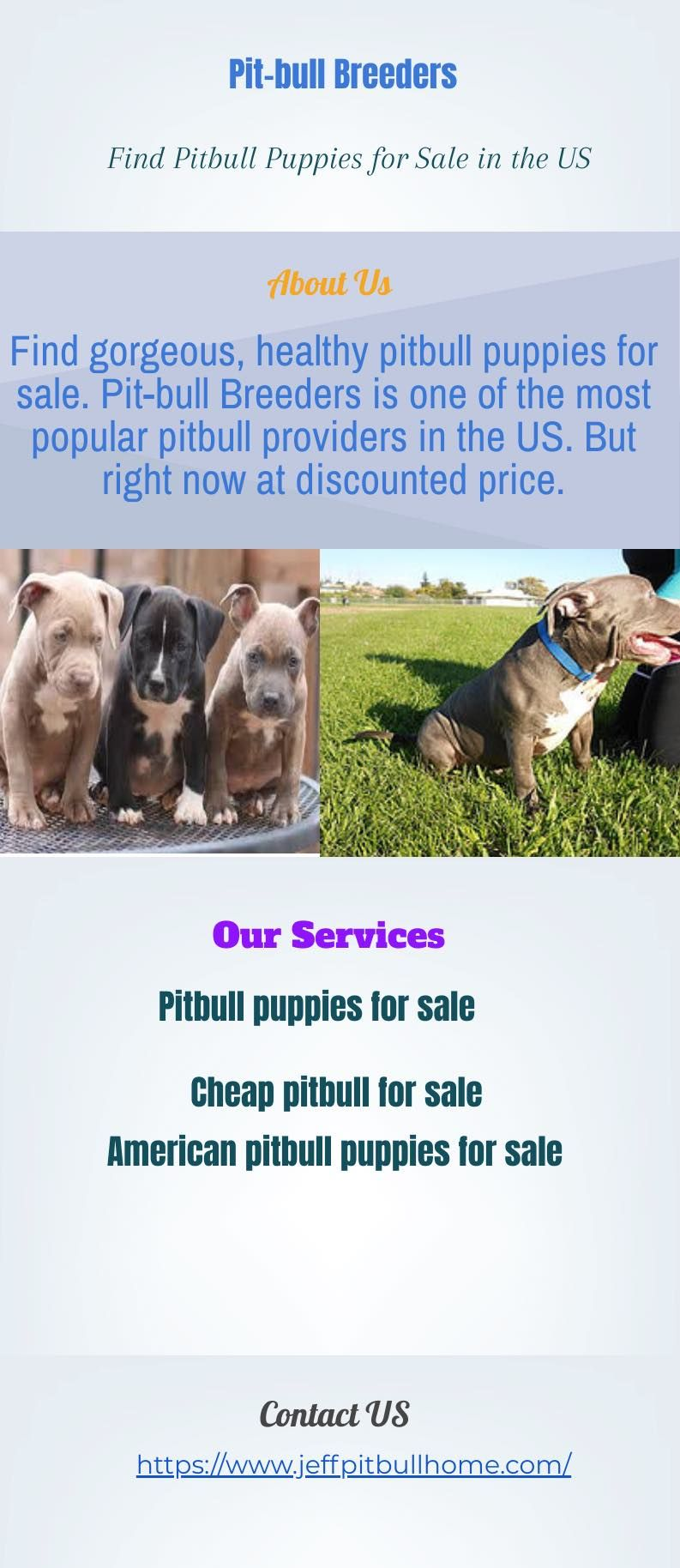Pin on Cheap Pitbull Puppies for Sale