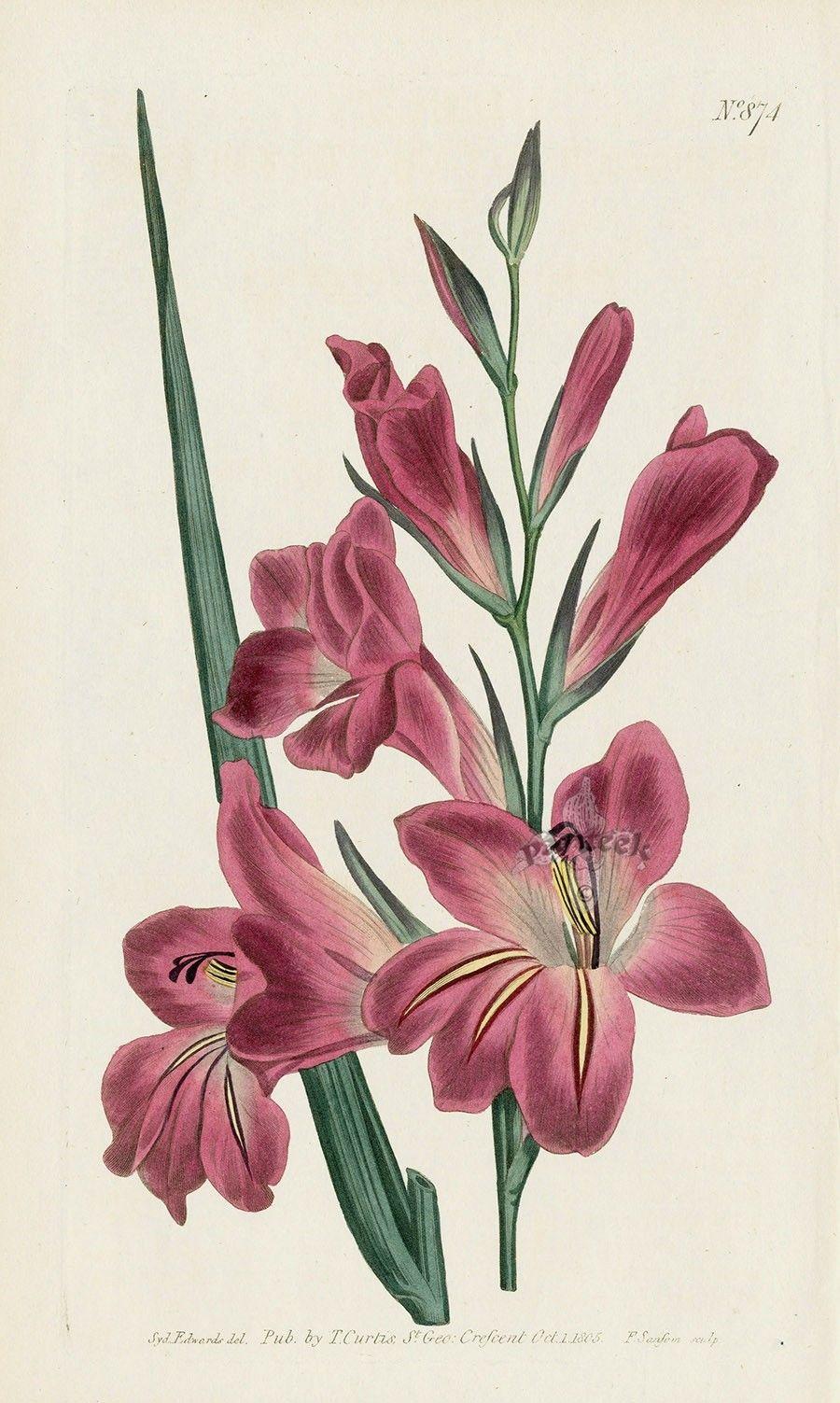 William Curtis Botanical Magazine Antique botanical