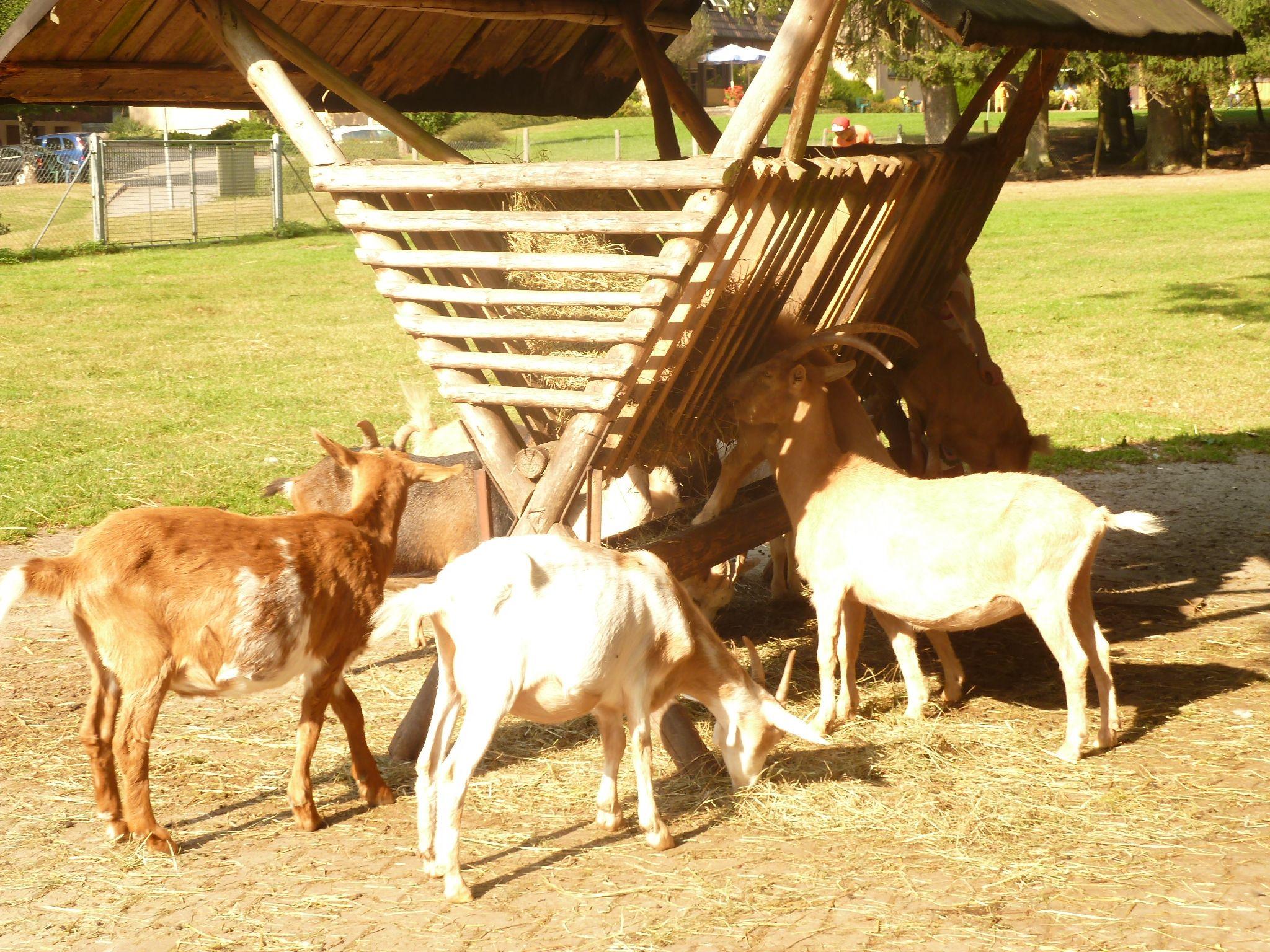 Monbachtal Eine Wanderung Zur Verwunschenen Schlucht Animals Horses Goats