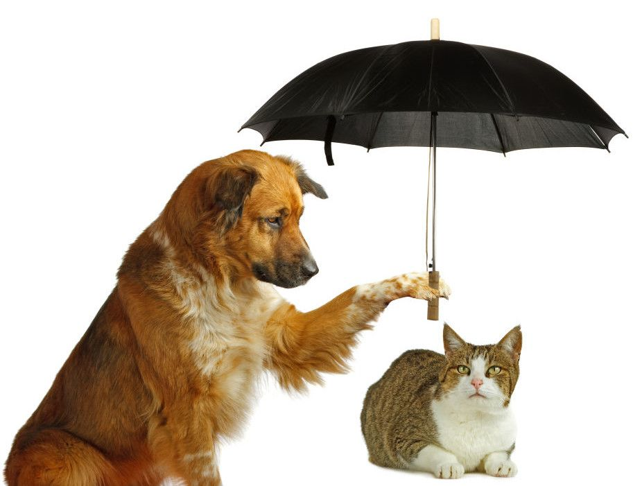 Pet Insurance In Florida Top 5 Companies Guide 038 Reviews