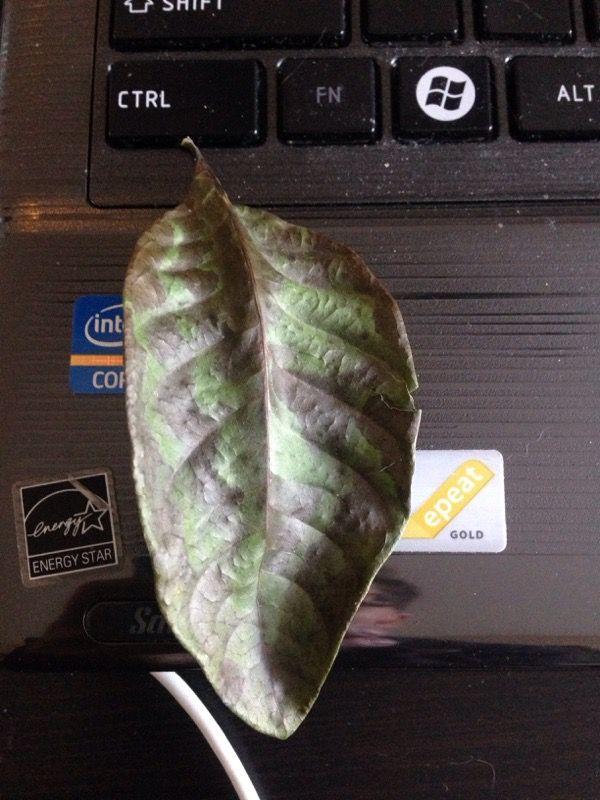 Free Plant Identification | Jasmine plant, Plant ...