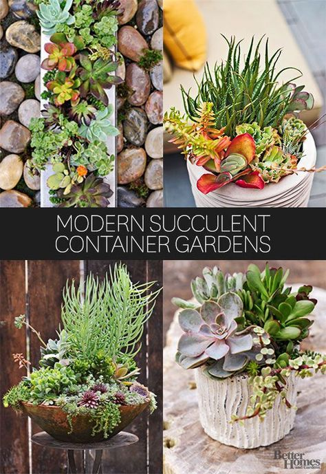 Decorate your home with succulents in containers using these fresh ideas. Even people without a green thumb can care for and grow succulents indoors and in a garden.