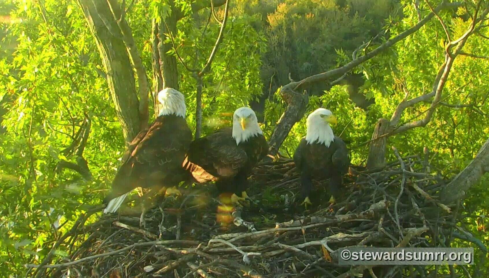 13+ Eagles nest animal hospital ideas