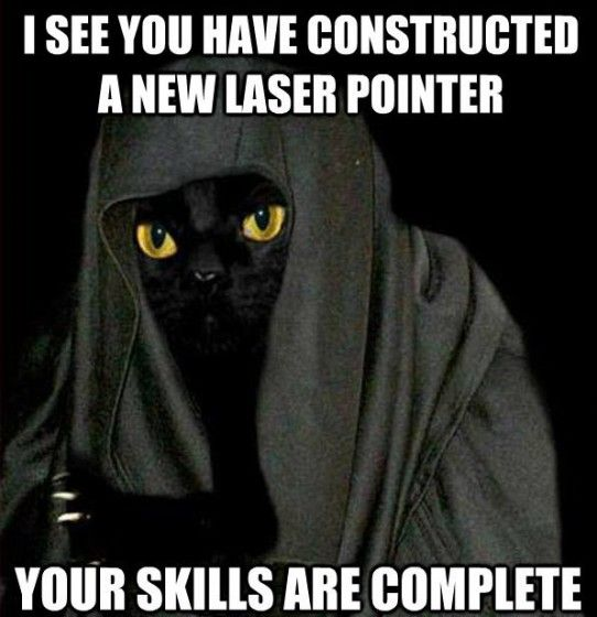 Funny Darth Meow Meme For Star Wars Day Funny Animal Pictures Funny Cats Funny Animals