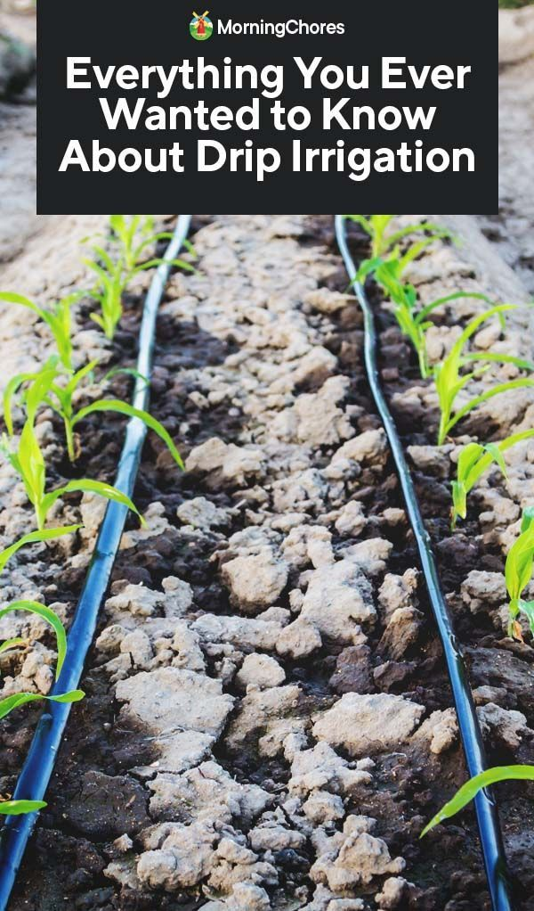 #irrigation #everything #wanted #about #ever #know #drip #you #toEverything You Ever Wanted to Know About Drip IrrigationEverything You Ever Wanted to Know About Drip Irrigation