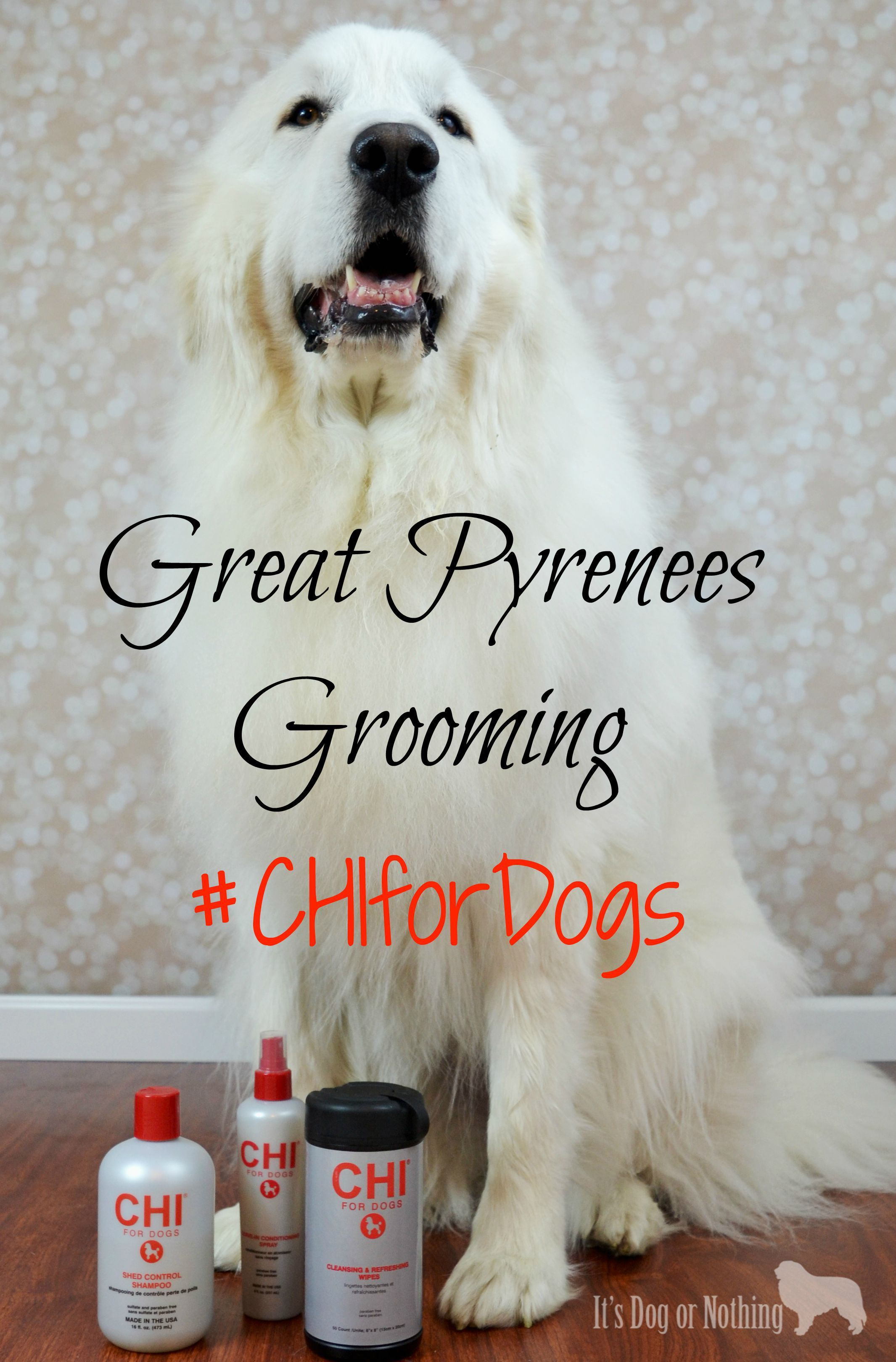 Great Pyrenees Grooming Chifordogs Dog Grooming Great Pyrenees