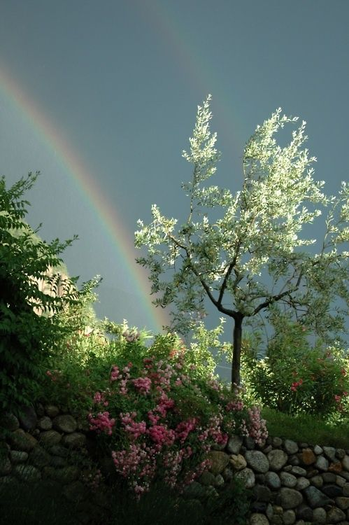 Rainbows°A Symbol of A Promise Kept°