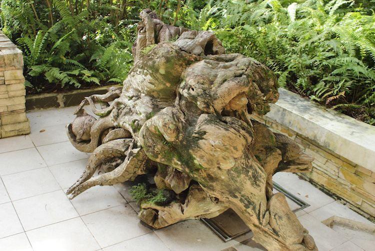 Arbre Mort Bois Flotte Et Souche D Arbre Pour Decorer Le Jardin Souche D Arbre Arbre Mort Decoration Jardin