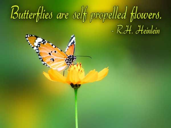 A Great Collection of Butterfly Image Quotes, Graphics
