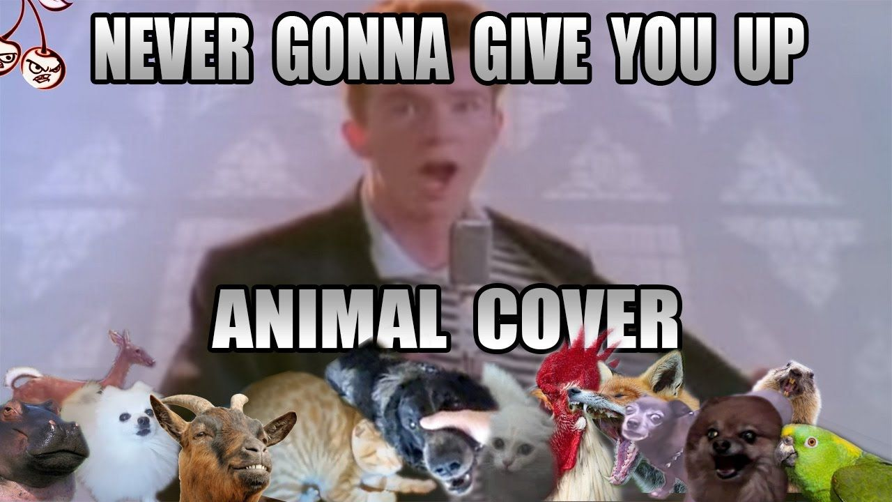 Rick Astley Never Gonna Give You Up Animal Cover Rick Astley Rick Astley Never Gonna Give You Up