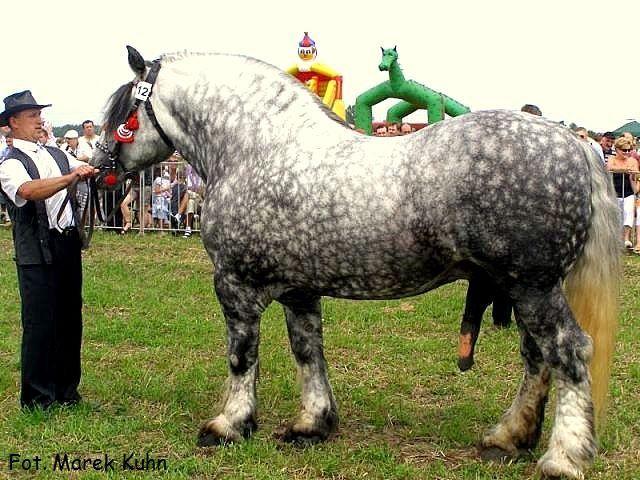 Konie Zimnokrwiste Bloog Pl Horses Cute Animals Animals