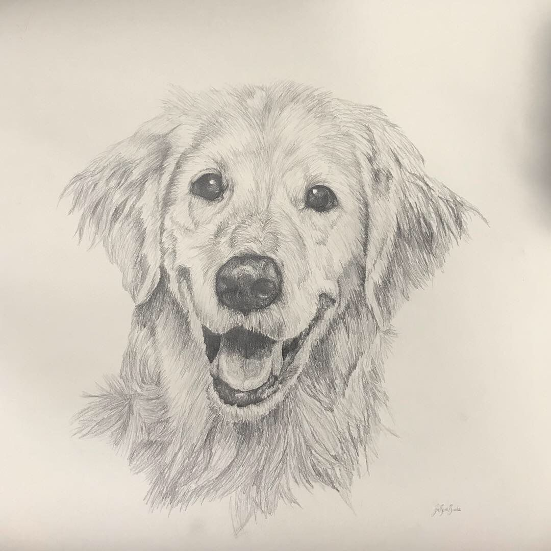Hand Drawn Commission Dog Portrait Dog Line Drawing Realistic Animal Drawings Golden Retriever Drawing [ 1080 x 1080 Pixel ]