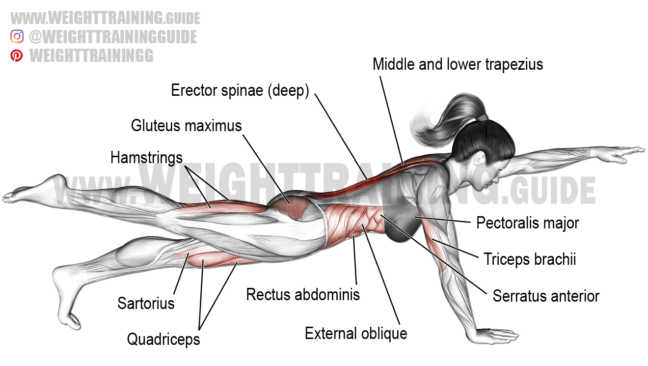 High bird dog plank exercise instructions and video