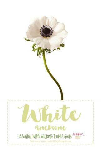 Essential white wedding flower guide names types pics white save this awesome in depth white wedding flowers guide for types of white flowers white flowers names and pictures plus season style info mightylinksfo