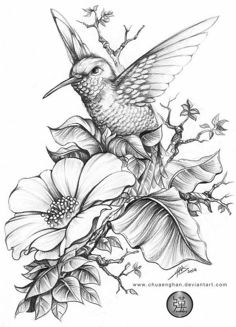 Hummingbird 蜂鸟 done for a book cover A size HB B B  sues