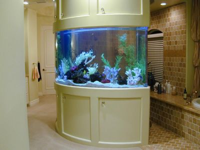270 gallon curved marine fish tank aquarium design marine