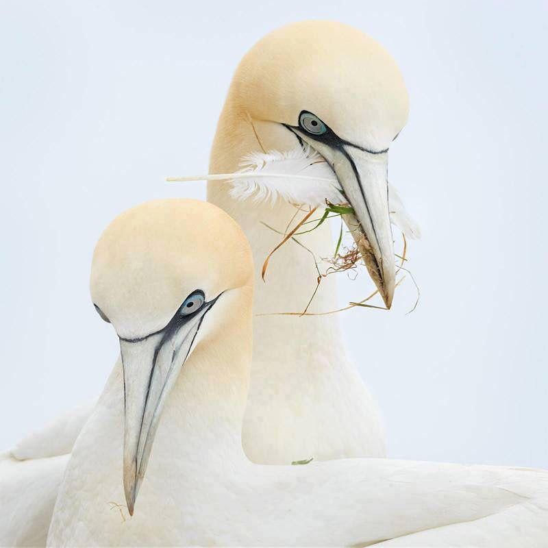 Beautiful pair  ✨