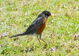 Spring, hurry up.  I told my 15 year old:  Wow! First  Robin just showed up- he just wasn't quite as excited?!  ;)