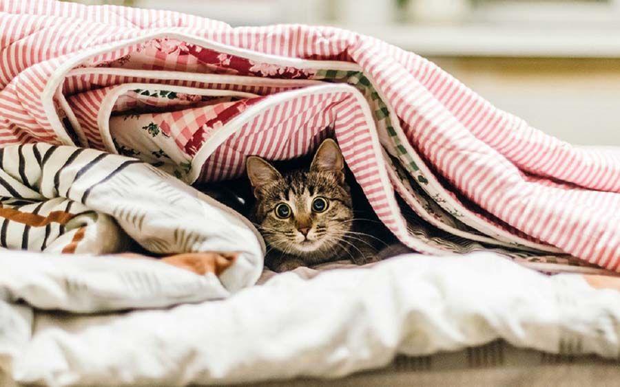 Котик в куче одеял картинка