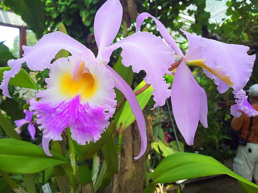 Orchideenblute Im Tropenhaus Des Berggarten Hannover Herrenhausen Aufgenommen Und Gepinnt Vom Immobilienmakler Und Hausverwalter In Garten Hannover Orchideen