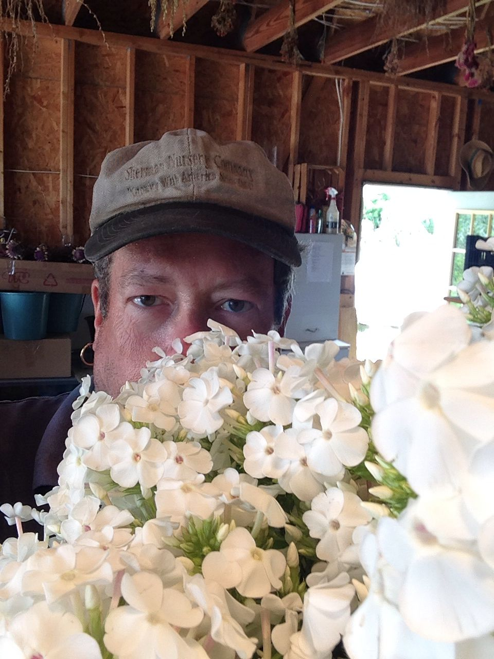 Phlox david white cut flowers pinterest cut flowers cut flowers phlox david white mightylinksfo