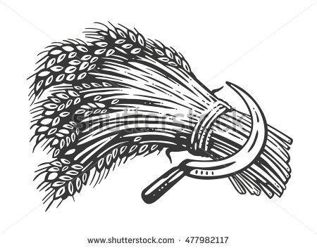 Sheaf Of Wheat Vektorillustration Stock-Illustration - Getty Images