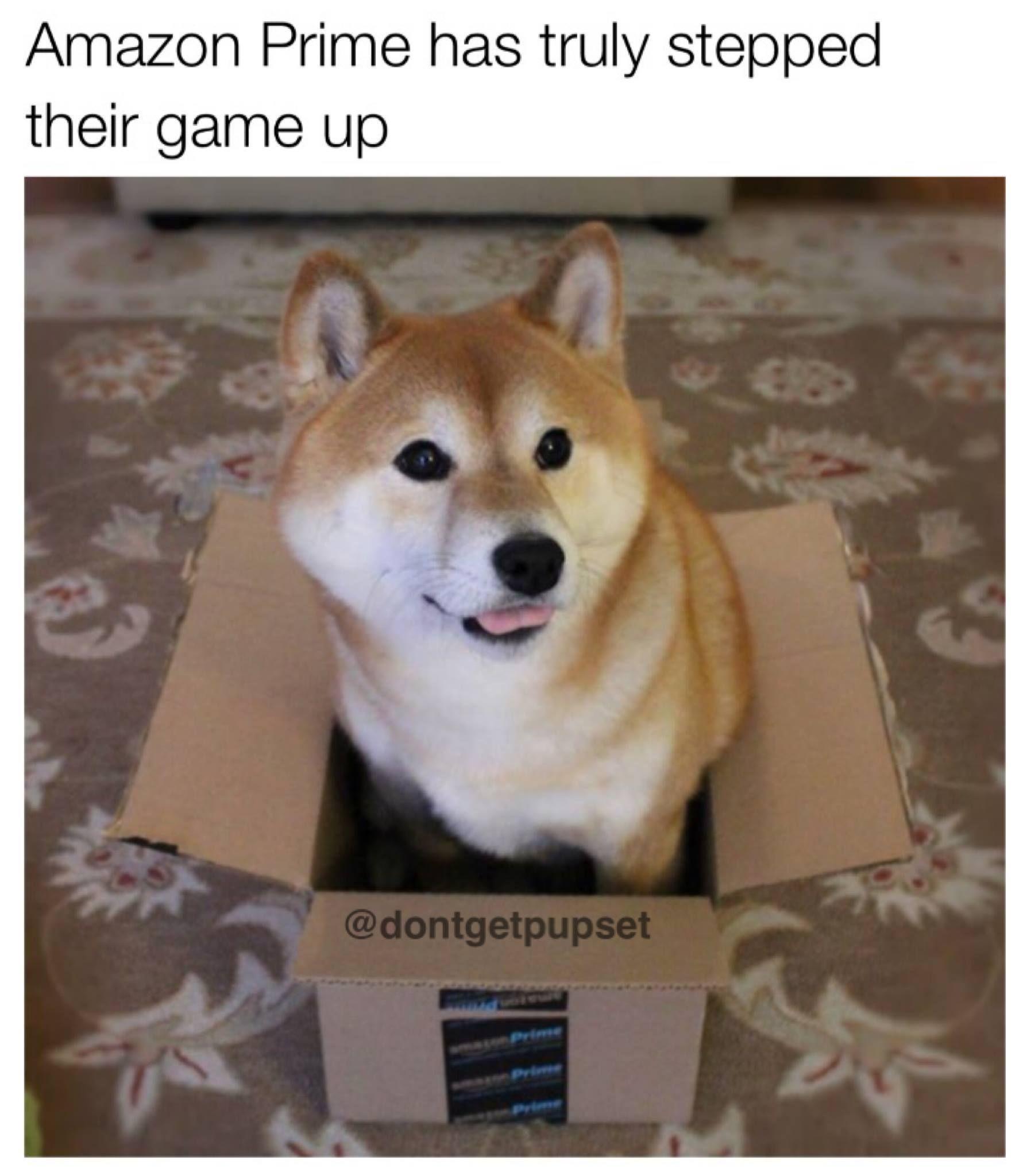 Amazon Prime Really Stepped Up Their Game I Ll Take 37 Of These Shiba Inu Shiba Inu Dog Dog Memes