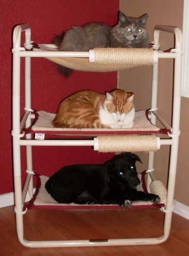 Pvc Indoor Cat Tower Cat Towers Cat Tree Plans Cats