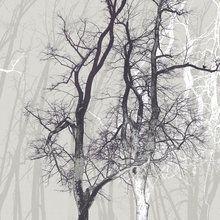 Valokuvatapetti - Wander Wood Powder