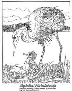 Wetlands Coloring Sheets Yahoo Image Search Results Bird