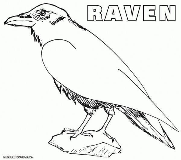 Image Result For Raven Coloring Pages Coloring Pages Raven Color Outline Drawings