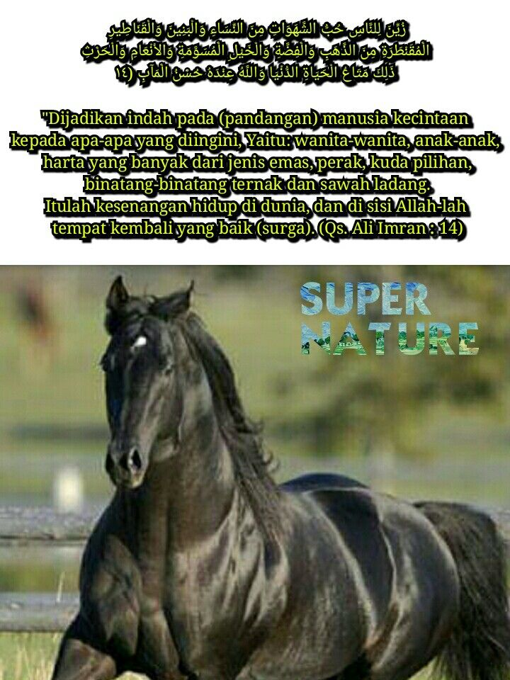 Jenis Jenis Kuda Di Dunia : jenis, dunia, Susyati, Allah, Binatang,, Kuda,, Jenis