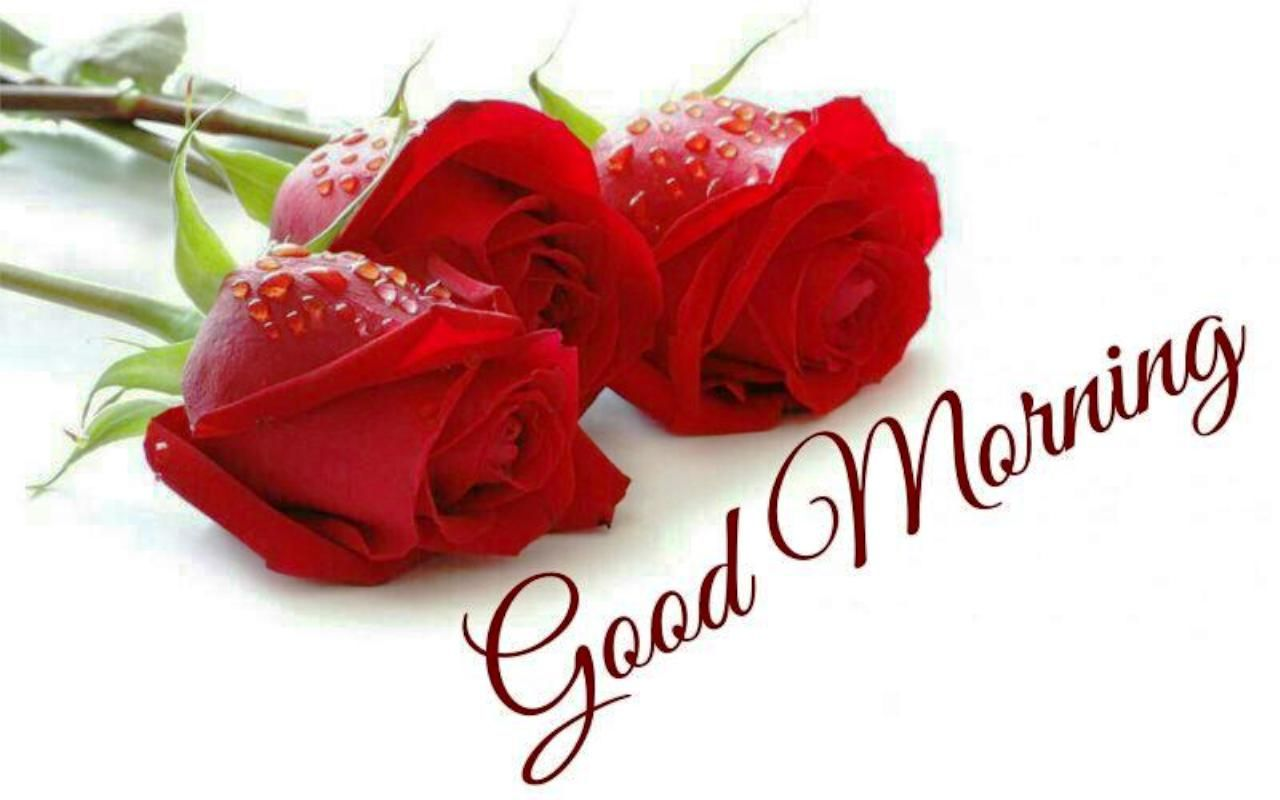 Good morning roses good morning red roses with quotes 6 - Good morning rose image ...