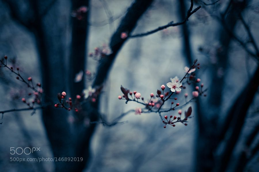 Blue Spring by unaciertamirada. @go4fotos