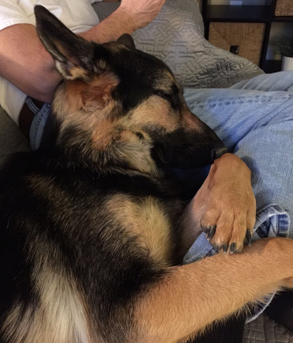 Pin by terry m.smith on German Shepherd (With images
